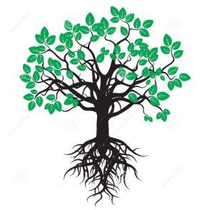 arbre-noir-avec-les-feuilles-et-les-racines-vertes-56029588